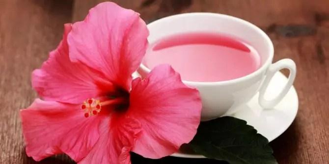 manfaat teh kembang sepatu untuk kesehatan
