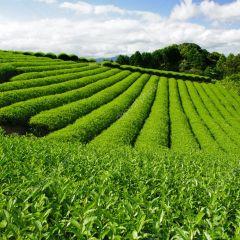 Sektor pertanian klasifikasi JASICA di BEI (sektor 1)