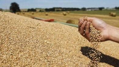 Photo of تقرير: 43 مليون إفريقي يواجهون انعدام الأمن الغذائي