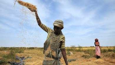 Photo of «ارتفاع الموج» يهدد مزارع الأرز في موريتانيا