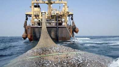 Photo of موريتانيا.. مصدر رسمي يشرح ضوابط الصيد السطحي