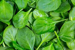 مأكولات-لزيادة-الطاقة-بشكل-طبيعي--فوائد-الصحية-ااالسبانخ--2-