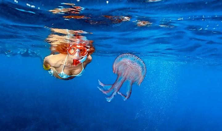 saidisale meduse