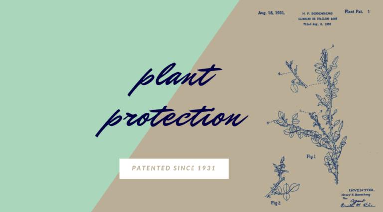 Plant patent since 1931