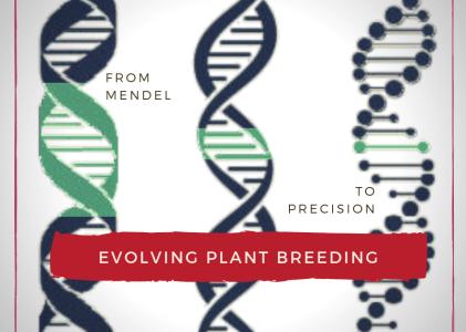 Evolution of Plant Breeding