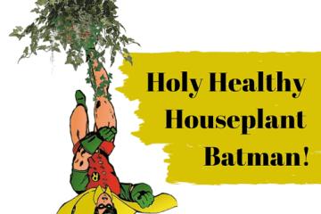 Holy healthy houseplant batman - GM plants