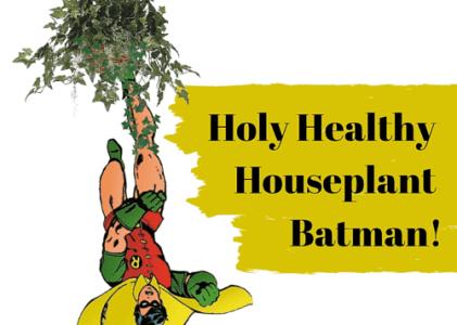 Holy Healthy Houseplant Batman!