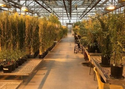 New Crop Varieties: The Journey from Lab to Field – Greenhouses