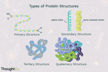 Proteins come in all shapes and sizes