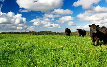 Using Livestock to Corral Climate Change