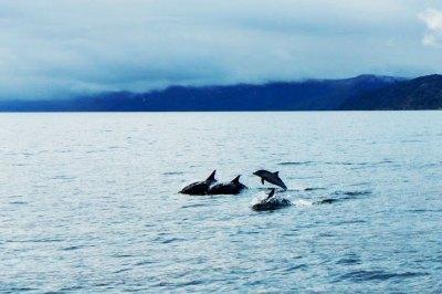 dolphin-pod