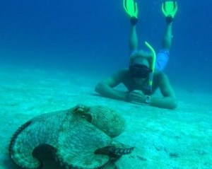 free_diving-300x286.jpg