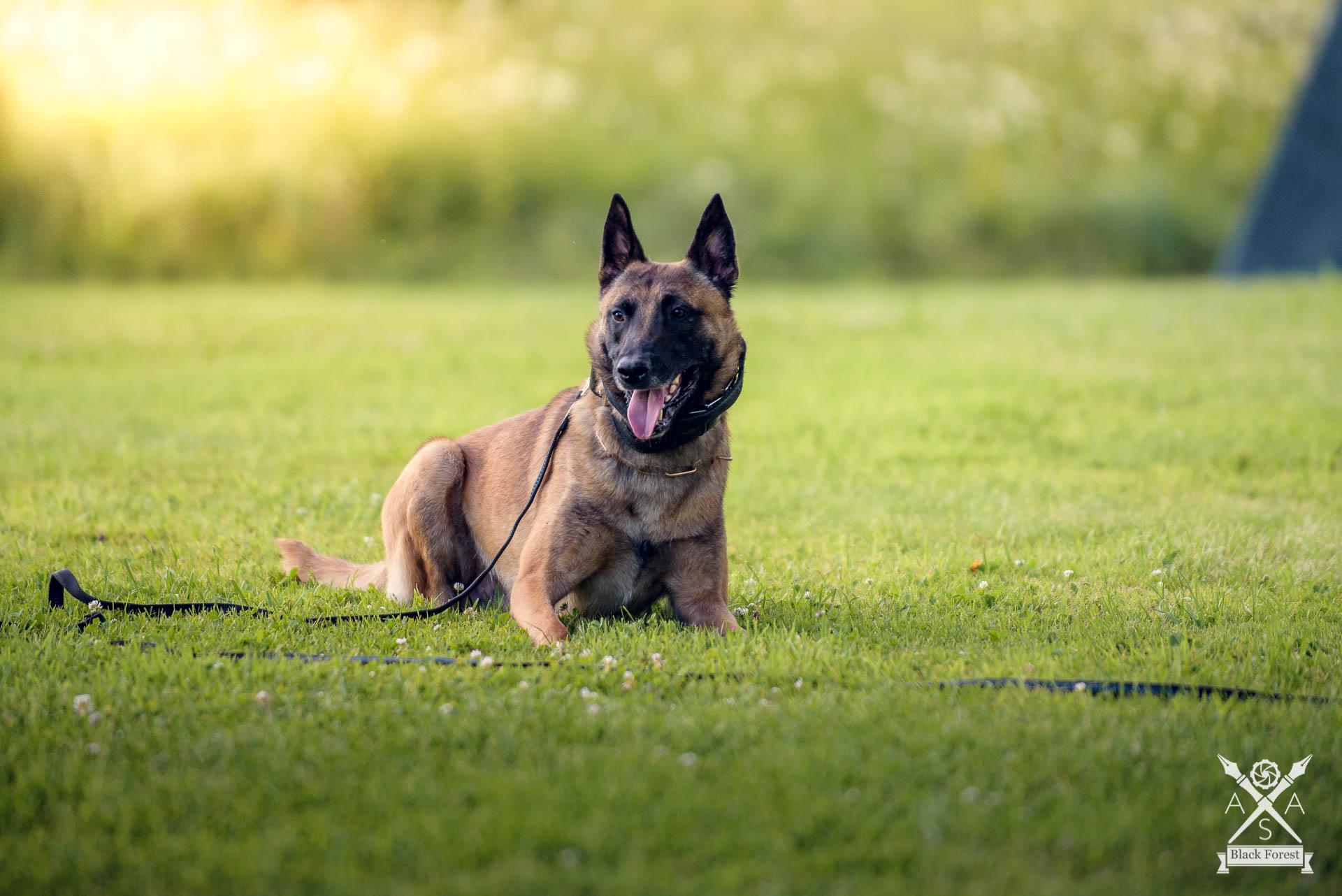 Hunde-Juli16 -AdrianSailer