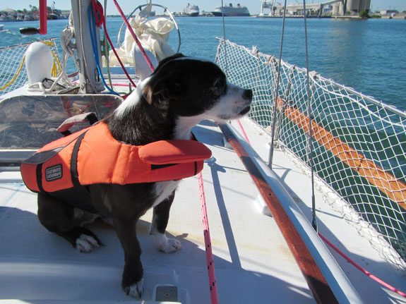 sailing_dog_lifejacket