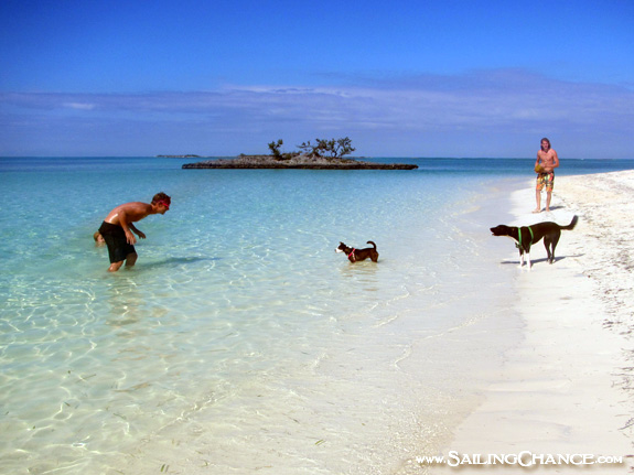 Grand_Cay_dogs
