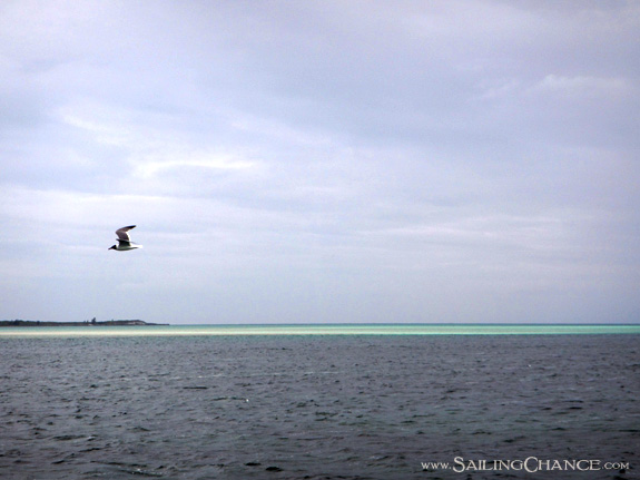 berry_islands_seagull