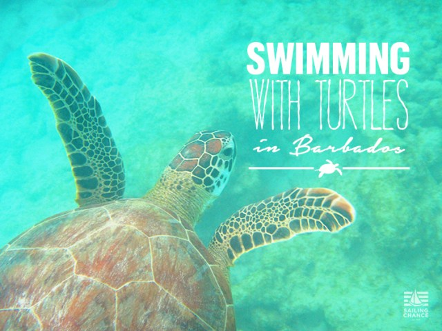 How to swim with the turtles in Barbados
