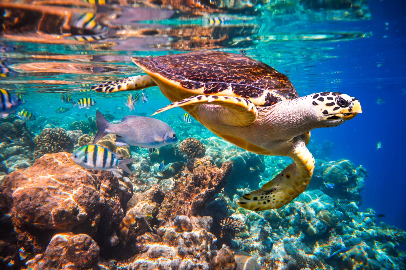 Why Coral Reef Protection Is Very Important