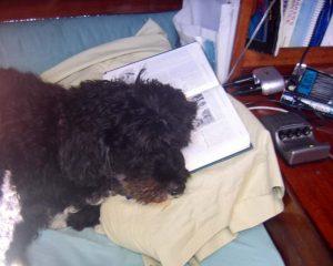 Fall asleep reading
