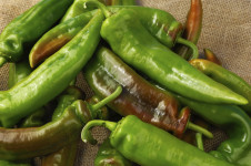 Close-up of Harvested Organic Anaheim Peppers