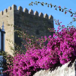 Travel Guide to Obidos, Portugal | Sails & Spices