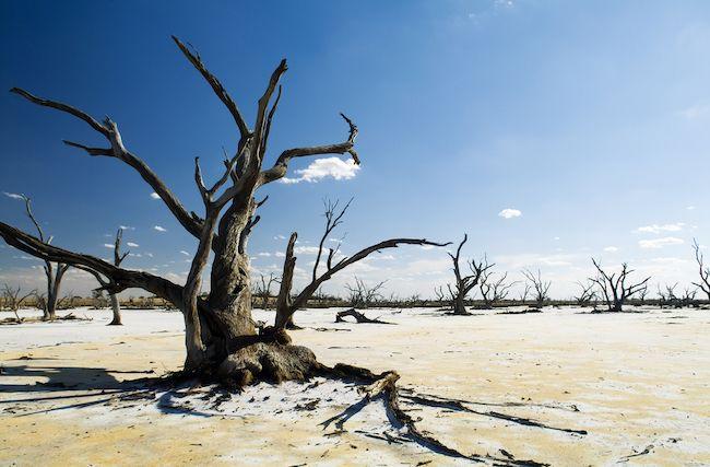 Génocide climatique