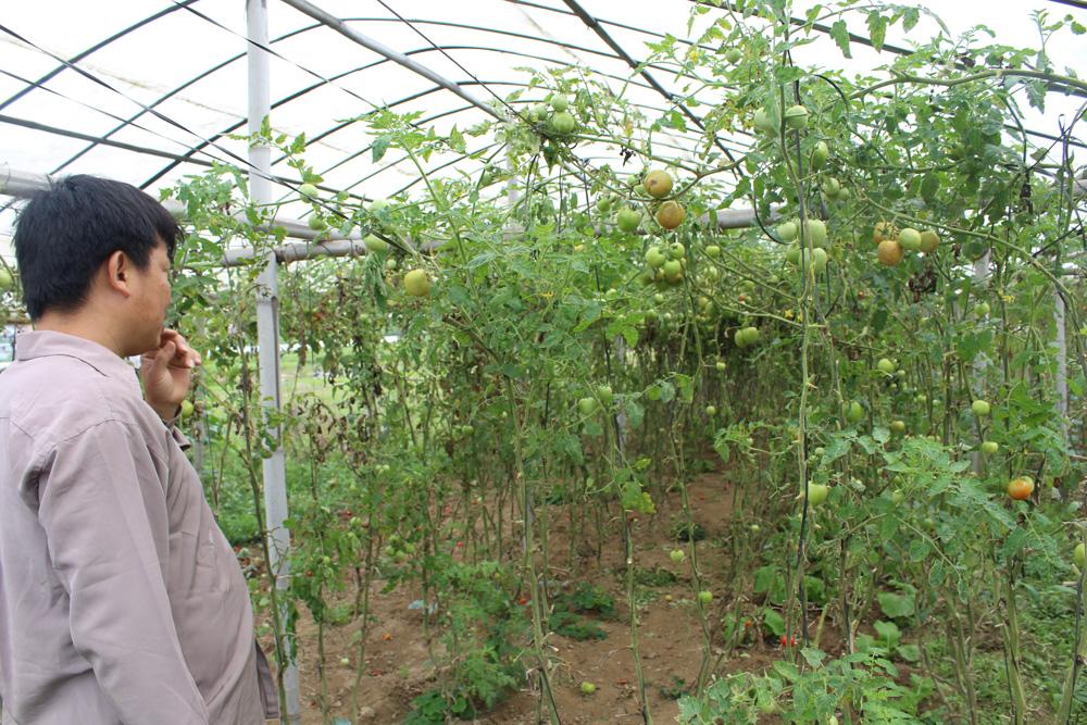 उपत्यकामा तरकारी खेतीः दुई वर्षमै उठ्छ लगानी