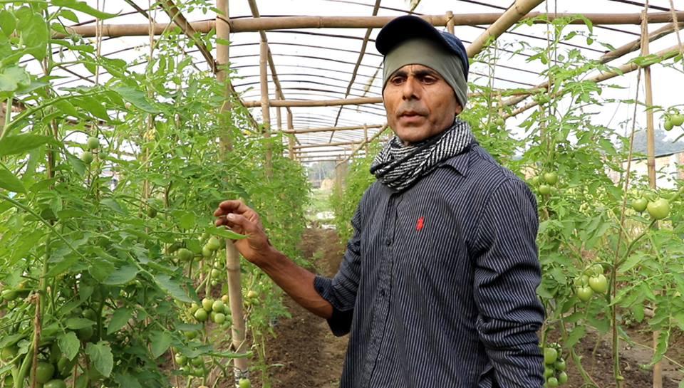 अर्गानिक खेतीमा व्यस्त खरेल, बास्तविक कृषकलाई सरकारले सहयोग नगरेको गुनासो
