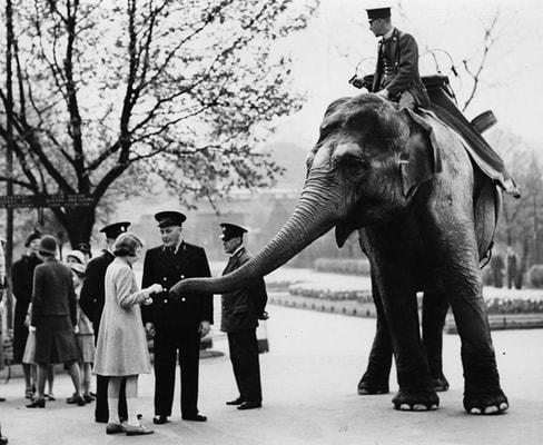 evacuating london zoo