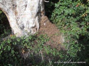 Une fourmilière impressionnante