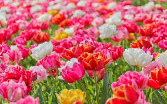 """Not enough flowers to say, """"Thanks Mom for all you do for me."""""""