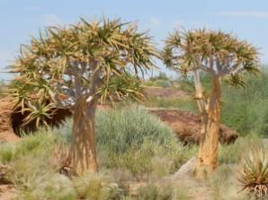 From tropical to desert landscape