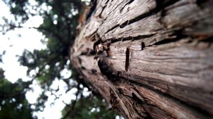 春日大社の巨木コレクション