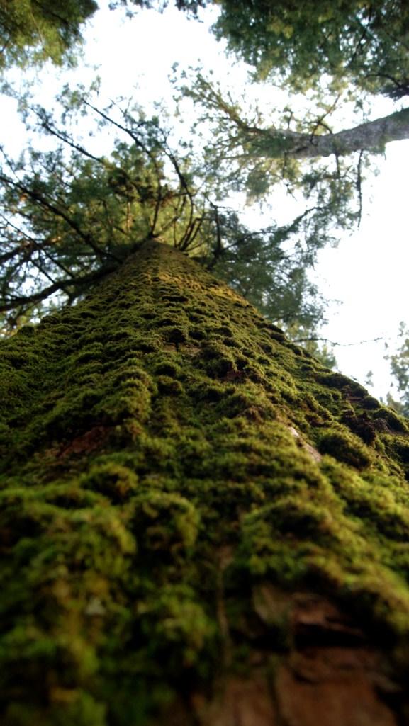 俺の好きな巨木