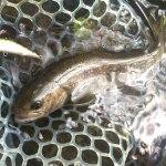 逃がした魚は大きかったのか|木曽川水系 ルアーフィッシング