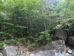 160902阿寺川ボロ吊り橋02