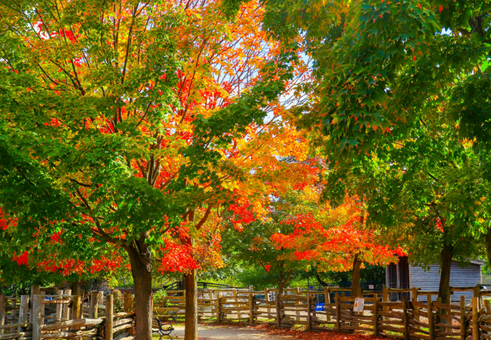Happy Fall, Y'all! – It's time to celebrate the most beautiful time of the year!