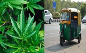 Faridabad: Woman Plants Marijuana In Husband Auto Over Affair