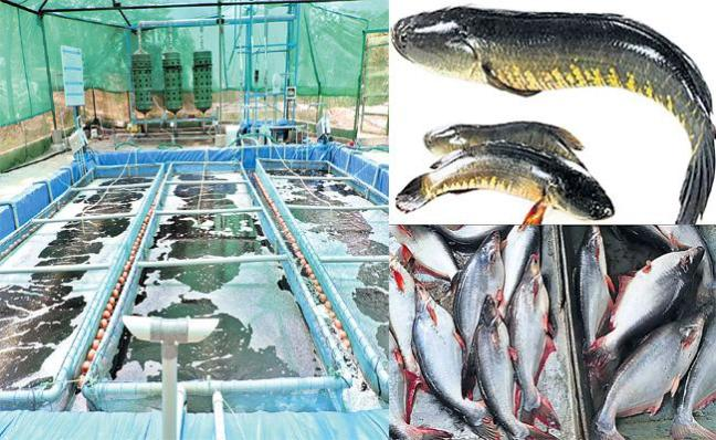 Fish Farming Special Story - Sakshi