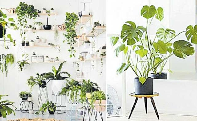 Special Story On Protect Your Indoor Plants From Strong Summer - Sakshi