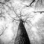 treeblackandwhite