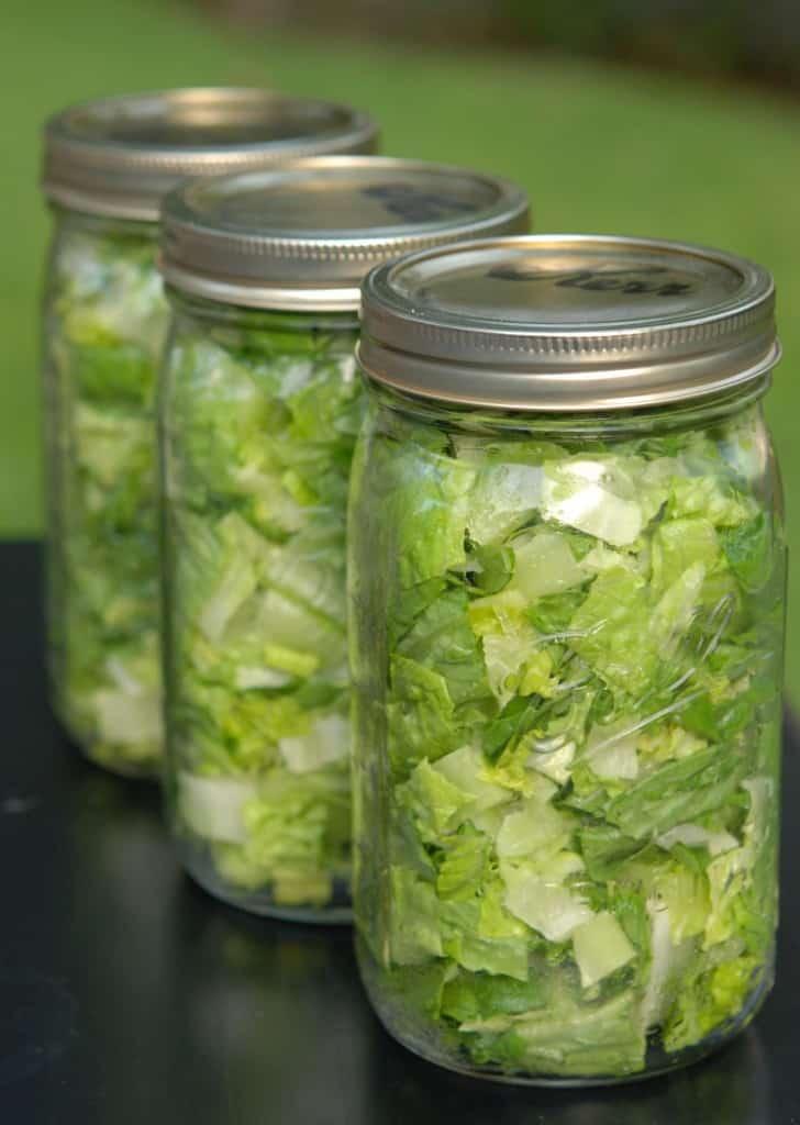 Vacuum-packed jars of Romaine lettuce