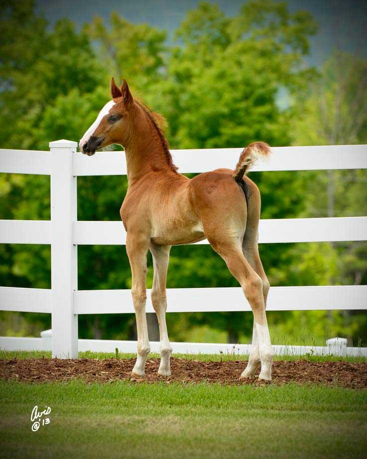 Salem Farm Foal