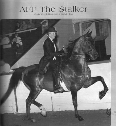 AFF The Stalker