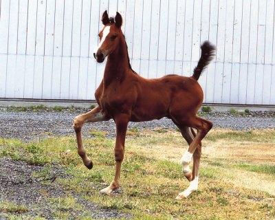 Bazinga-Foal-2Web