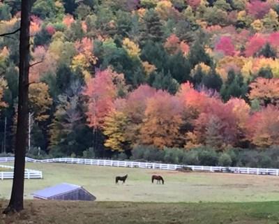 fall-color-horz