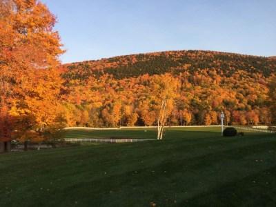 fall-gold-pasures
