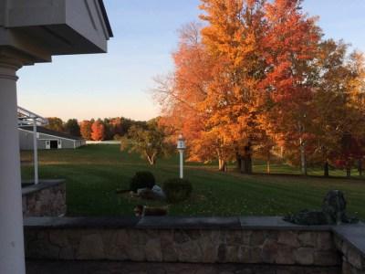 patio-maple-barn