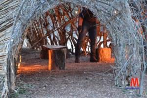 nidi parco paduli - oliveto pubblico