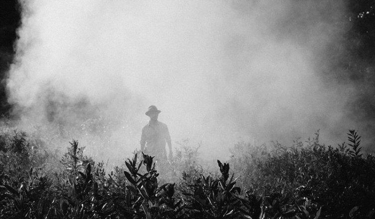 pesticidi - diserbanti - insetticidi - agricoltura
